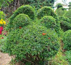 Mickey Mouse Topiary Secret Edna Harper U0027s Topiary Garden In San Diego Socal Field Trips