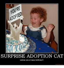 Surprise Meme - surprise adoption cat wishes you a happy birthday motifake com