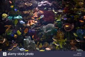 Fish Tank Reception Desk The Famous Reception Desk Aquarium At The Mirage An Mgm Resort