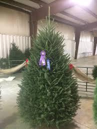 north carolina grand champion fraser fir sturgill tree farm
