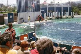 Six Flags Dolphin Swim Six Flags Discovery Kingdom