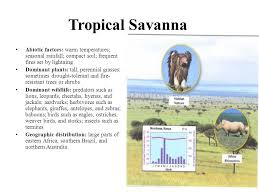 Tropical Savanna Dominant Plants - chapter 23 using natural resources organisms and their