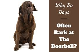 dog barks when we leave why do dogs bark at the doorbell labraodrtraininghq