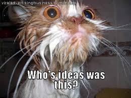 Wet Meme - wet cat meme meme magnet