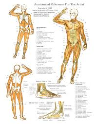 anatomy diagrams printable skeleton label worksheet with answer