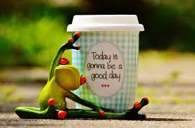 happy green color free images coffee bird sweet cute cup green color frog