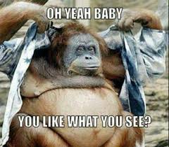 Funny Monkey Meme - 20 funny monkey memes you ll totally fall in love with