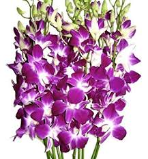 fresh flowers fresh flowers purple dendrobium orchids fresh cut