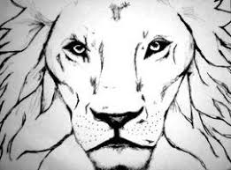 images of easy sketches of fierce lions google search art