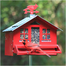 cardinal bird home decor amazon com perky pet squirrel be gone ii country house bird