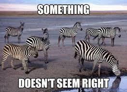 Tuesday Funny Memes - cat memes funny memes