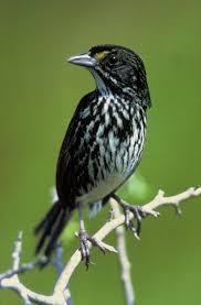 bird conservation wikipedia