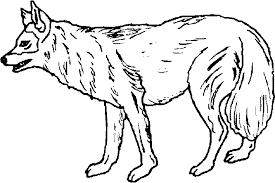 imagenes de animales carnivoros para imprimir animal carnivoro colorear imagui