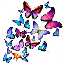 butterflies flying stock photos royalty free butterflies flying