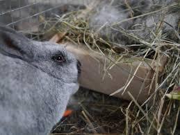 reviving cold newborn baby rabbits u2013 backwoods mama