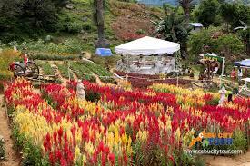 cebu sirao flower farm cebu city tour
