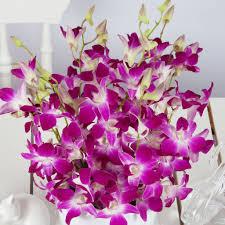 dendrobium orchids cheap dendrobium orchids flower bouquets next day delivery