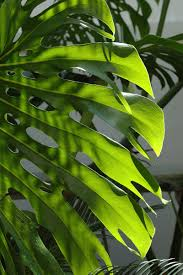 Tropical Looking Plants 6 Of The Best Tropical Plants Sa Garden And Home