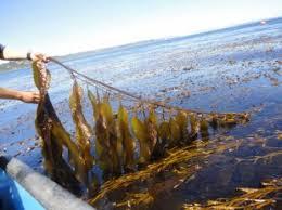 aquaculture on emaze