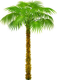 palm tree clipart painted palm pencil and in color palm tree