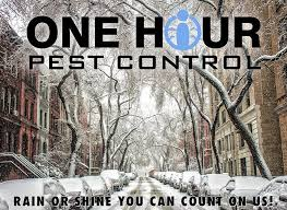 how much does it cost to hire a pest exterminator in nyc