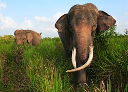 how to scare elephants u2014for their own good