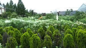 Slo Botanical Garden by Asan World Flower Botanical Garden Youtube