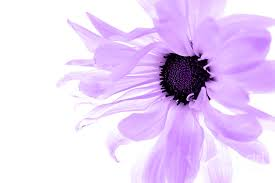 purple flower purple flower photograph by angela