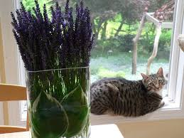 two vase floral arrangements double the impact and are cat proof