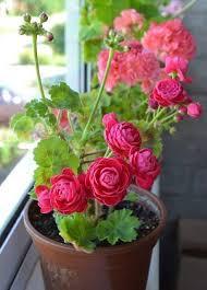 1788 best beautiful flowers images on pinterest beautiful