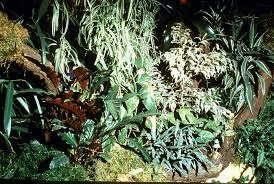the rainforest terrarium u2013 part 1