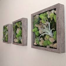 Vertical Wall Garden Plants by Air Plant Vertical Wall Garden With Air Plants Tillandsia