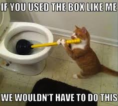 Awesome Quotes About Cats Being - 1257 best hilarious images on pinterest funny stuff ha ha and