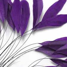 purple feather purple feather coquetips asashine
