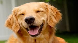 Smiling Dog Meme - meme template search imgflip