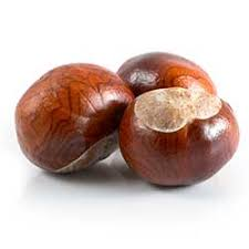 conker definition and meaning collins dictionary