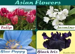 Different Shades Of Purple Names A Complete List Of Asian Flowers With Spellbinding Pictures