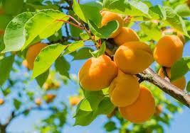 flower fruit fruit plant reproductive britannica