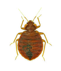 Treatment For Bed Bugs Bed Bug Control Guide Bed Bug Extermination U0026 Killer Products