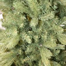 puleo 6ft ontario fir christmas tree c6 from alton garden