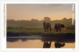 What Side Do Stamps Go On by Assateague Island Natl Seashore 3rd Of 16 Stamps Celebrating