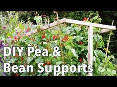 How To Make An Urban Garden - growing beans for drying growing beans bean plant and beans