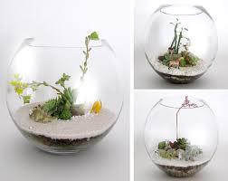 succulent terrariums d hub