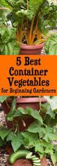 fall vegetable gardening for beginners best ideas on pinterest