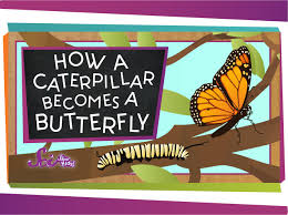 how a caterpillar becomes a butterfly youtube