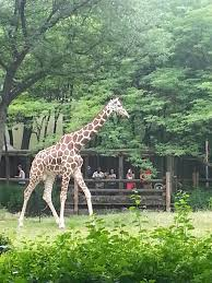8 tips to save money at the zoo and brookfield zoo pictures