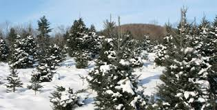 tree shopping guide the nature conservancy