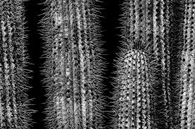 cool black texture introduction to black and white nature photography