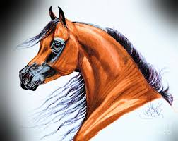 arabian in color pencil drawing by cheryl poland