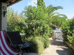 palmier du chili maison de vacances gîte palmier soleil 410 france gruissan
